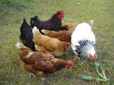 Homegrown fertilizer