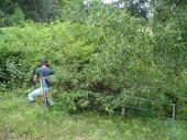 Bush regen - healing the land