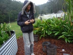 Kelvin - Gardening