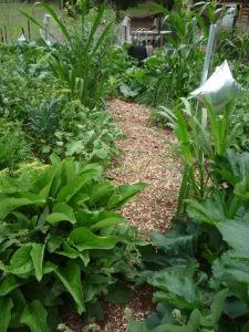 Comfrey on garden edges