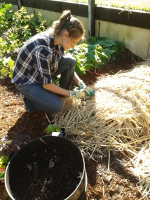 Ana Lucia - planting