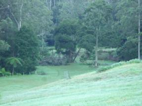Tree falls on pasture...Nature is offering timber for fuel and for farm posts...