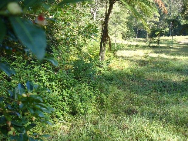 Lantana creek