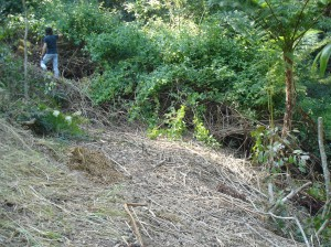 Lantana removal on steep gully