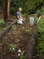 Planting natives to restore habitat and seed bank + peg where natives are sprouting off the ground.