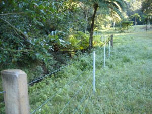 After: native tree ferns can emerge freely now that the blanketing lantana is removed