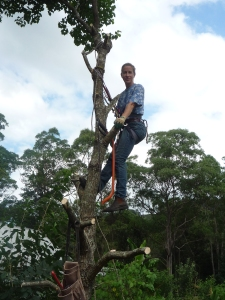 Climbing the Tallow tree