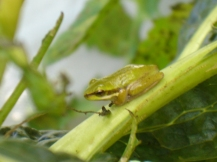 Frog in the garden