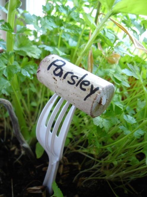 My first ever garden many years ago...parsley