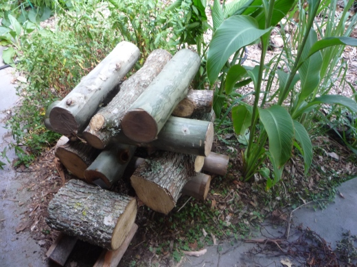Storing your logs in a sheltered moist location