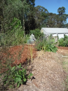 Newly planted living swales of vetiver