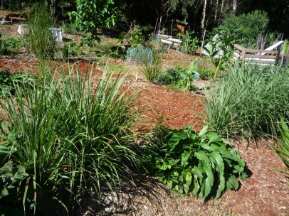 Living swales of vetiver and comfrey nursing young fruit trees