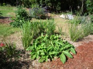 Living swales of vetiver and comfrey