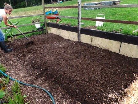 Double-dug beds finished, ready for mulching