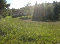 Lush pastures