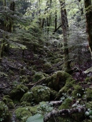 Moss covered forests