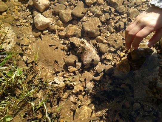 Pristine creeks