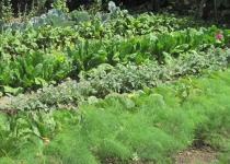 Our parents' garden in 2010