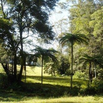 Ferns, creek and rainforest