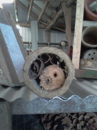 Bamboo insect hotel to hang in a tree