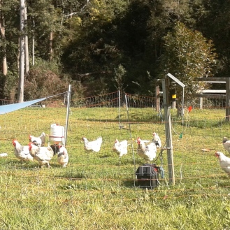 Rotational chooks