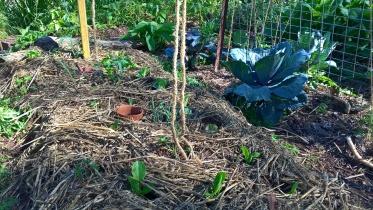 Tomatoes, clay pots and salad greens