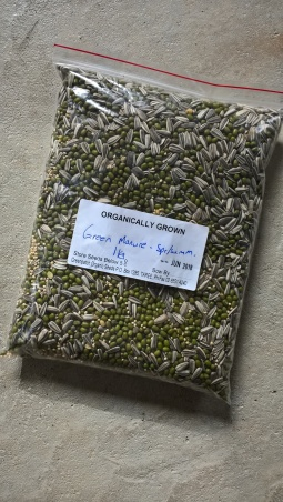 Green Patch Seeds