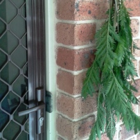 Tansy hanging by the door