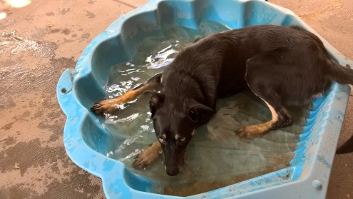 Kiddies pool for the dog