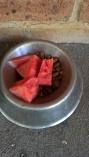Watermelon in dog bowl