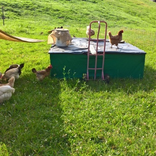 90% shade cloth for our pastured chooks